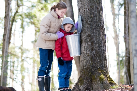 Photo for two children looking in a sap bucket at a sugar bush - Royalty Free Image