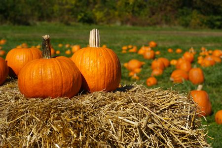 Orange pumpkins on top of dried hay bales with pumpkin patch on green field in the background.