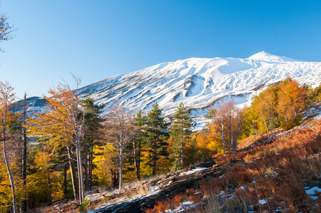 Photo for Perspective of northern side of Mount Etna, Sicily, and of a pine and beech wood in autumn - Royalty Free Image