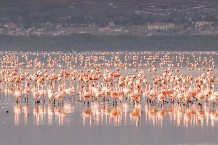 Photo for Flamingo - Royalty Free Image