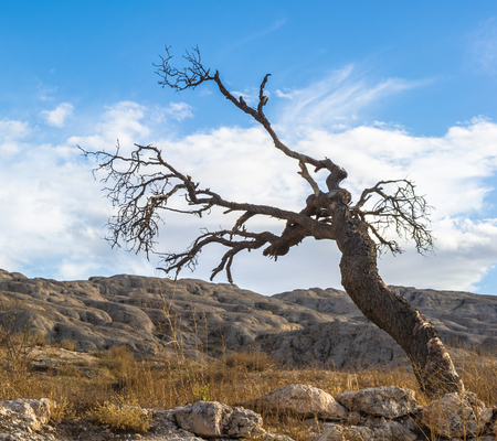 Dry tree over the mountain with stones