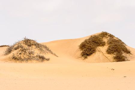 Photo for Beautiful landscape of the Namib-Naukluft National Park, Namibia - Royalty Free Image