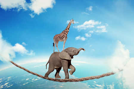 Foto de Managing risk business challenges uncertainty concept. Elephant with giraffe walking on dangerous rope high in sky symbol balance overcoming fear for goal success. Young entrepreneur corporate world - Imagen libre de derechos