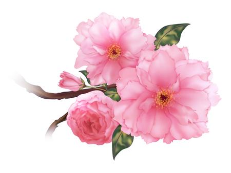 Illustration for 3D realistic pink cherry sakura flower b - Royalty Free Image