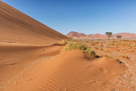 Photo for landscape with shrubs and red dunes in the Namibia desert. Sossusvlei. - Royalty Free Image