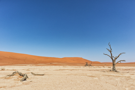 Photo for Landscape of death vlei, dead and dry trees with red dunes in Sossusvlei. Namibia. - Royalty Free Image