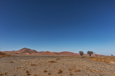 Photo for lonely tree landscape with shrubs and red dunes in the Namibia desert. Sossusvlei. - Royalty Free Image
