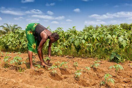 Foto de CABINDA/ANGOLA - 09 JUN 2010 - Rural farmer to till land in Cabinda. Angola, Africa. - Imagen libre de derechos