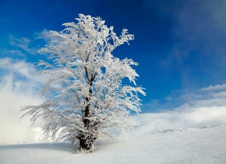 Foto de Winter tree - Imagen libre de derechos