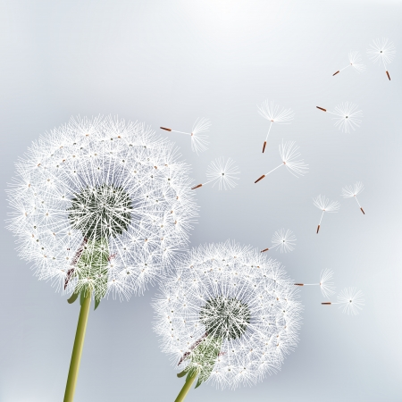 Illustration for Stylish floral background with two flowers dandelions   - Royalty Free Image