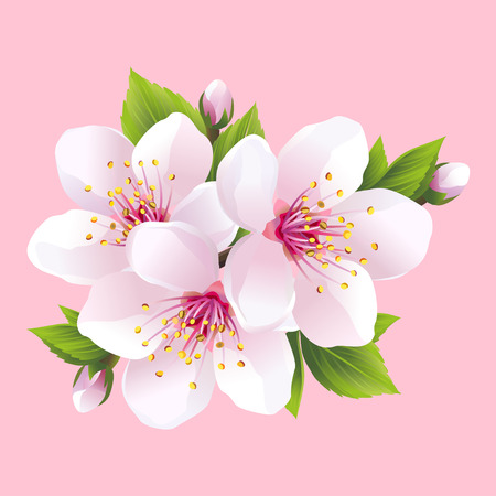 Ilustración de Branch of white blossoming sakura  japanese cherry tree. Beautiful pink cherry blossom isolated on pink background. Stylish floral spring wallpaper. Vector illustration - Imagen libre de derechos