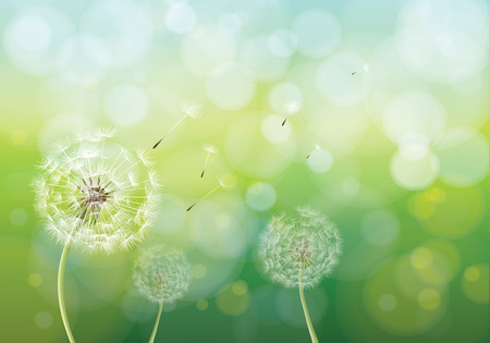 Illustration pour Vector illustration of spring background with white dandelions. Dandelion seeds blowing from stem. - image libre de droit