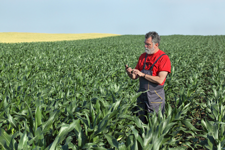 Foto für Farmer  inspect quality of corn using phone or tablet - Lizenzfreies Bild