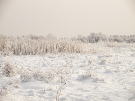 Photo for Christmas fairy tale snow scenary. Hillocky fields or swamp. Winter cloudy landscape with snow on the ground and frost on reeds and branches of bushes. - Royalty Free Image