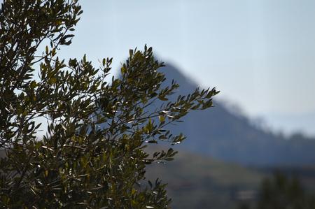 Foto de Beautiful Sicilian Landscape, Mazzarino, Caltanissetta, Italy, Europe - Imagen libre de derechos