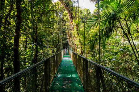 Photo for Hanging Bridges in Cloudforest - Monteverde, Costa Rica - Royalty Free Image