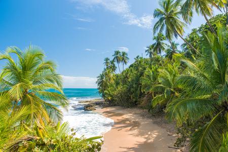 Foto de Wild caribbean beach of Manzanillo at Puerto Viejo, Costa Rica - Imagen libre de derechos