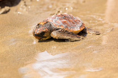 Photo for Turtle Baby on beach - Royalty Free Image