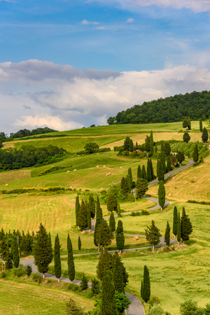 Photo pour Cypress tree scenic winding road in Monticchiello - Valdorcia - near Siena, Tuscany, Italy, Europe. - image libre de droit