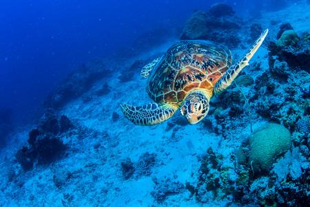 Foto de Turtle - Imagen libre de derechos