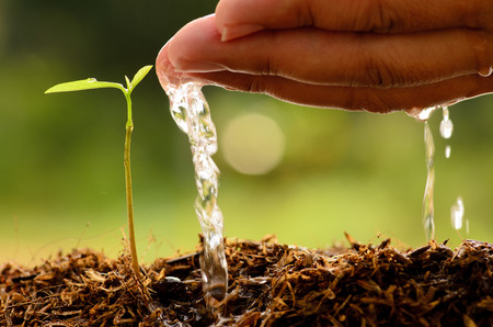 Photo pour Agriculture,Tree,Se eding,Seedling,Male hand watering young tree over green background,seed planting - image libre de droit