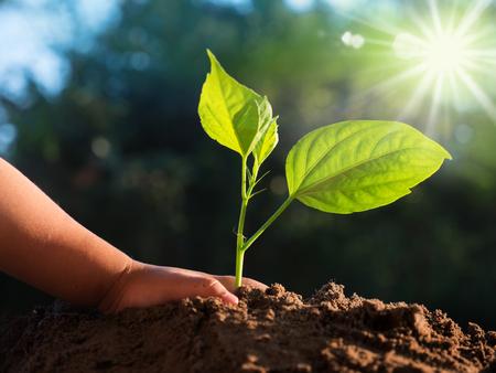 Foto de Close up kid hand planting young tree over sunlight and green nature environment - Imagen libre de derechos