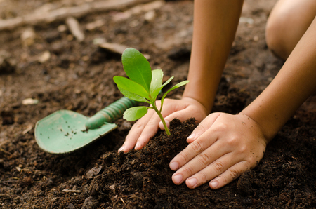 Photo for Close up Kid hand planting young tree - Royalty Free Image