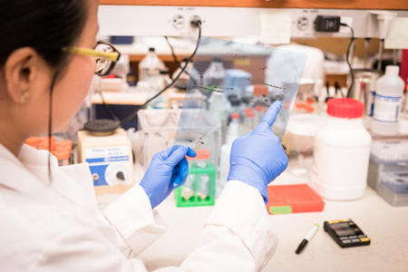 Photo for Researcher working on Western Blot results - Royalty Free Image