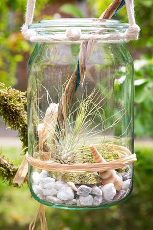 Foto de Tillandsia argentea, a airplant, decorative placed in a jar. - Imagen libre de derechos