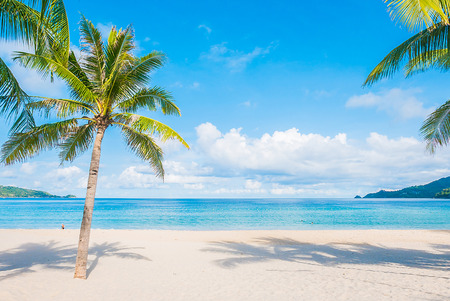 Photo for Coconut palm tree with Beautiful Tropical beach and sea - Royalty Free Image