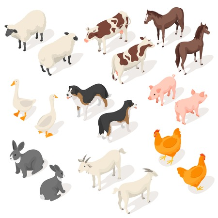 Ilustración de Isometric 3d vector set of farm animals. Back and Front view. Icon for web. Isolated on white background. - Imagen libre de derechos