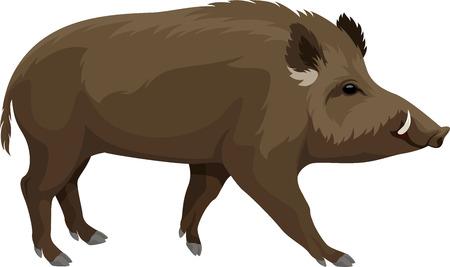 Ilustración de vector wild hog boar mascot - Imagen libre de derechos
