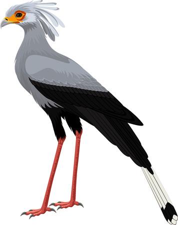 Ilustración de Secretary bird (Sagittarius serpentarius) vector illustration - Imagen libre de derechos