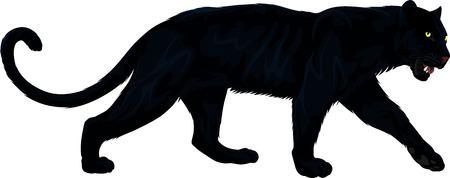Photo pour vector black panther - image libre de droit