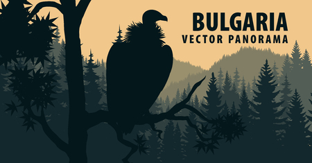 vector panorama of griffon vulture