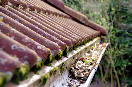 Photo pour Dirty roof with dense moss and gutter with leaves requiring cleaning - image libre de droit