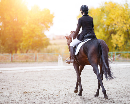 Photo pour Young rider woman on bay horse performing advanced test on dressage competition. Rear view image of equestrian event background with copy space - image libre de droit
