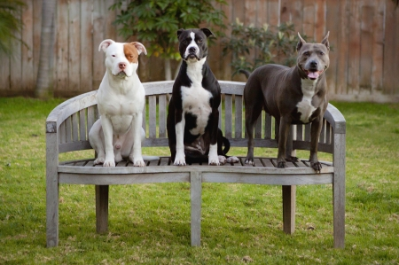 three dogs on bench