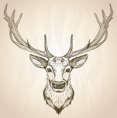 Illustration for Hand drawn graphic sketch illustration of a deer head with big antlers, front view, vector wildlife poster. - Royalty Free Image