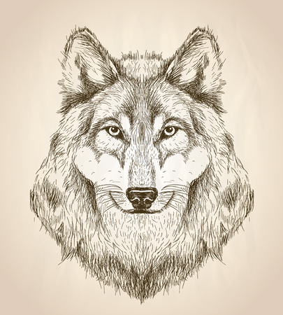 Photo pour Vector sketch illustration of a wolf head front view, black and white vector wildlife design. - image libre de droit
