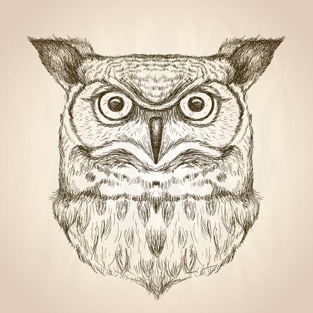 Ilustración de Sketch illustration of an owl head, front view, vector wildlife hand drawn design. - Imagen libre de derechos