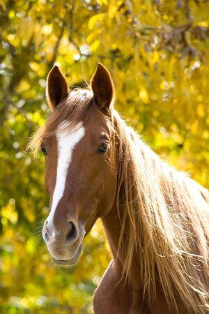 Photo pour horse farm animal  - image libre de droit