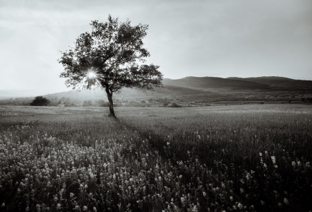 abstract  black and white landscape with lonely tree