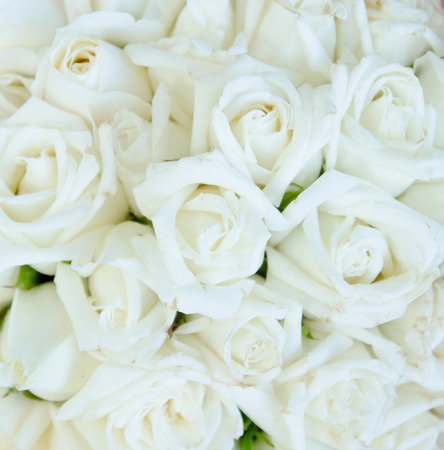 Photo for Bunch of rose - Royalty Free Image