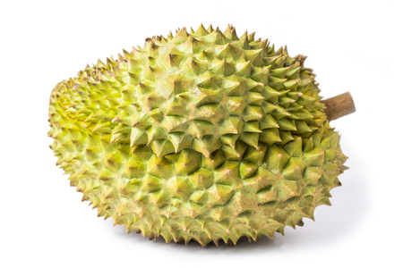 Photo for Durian monthong fruit fresh isolated on white background and clipping path. The name of science : Durio zibethenus Linn. - Royalty Free Image