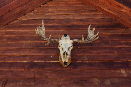Photo for Old skull of a moose on facade of the wooden house - Royalty Free Image
