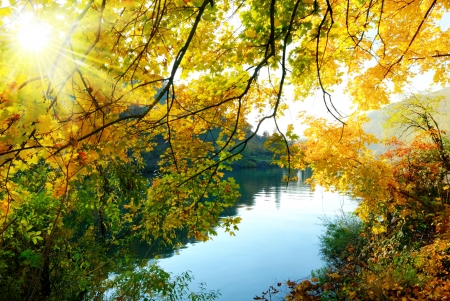 Photo for Colorful autumn scenery at a river, with the sun shining through the golden leaves - Royalty Free Image