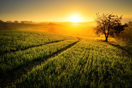 Foto de Rural landscape with a hill and a single tree at sunrise with warm light, trails in the meadow leading to the golden sun - Imagen libre de derechos