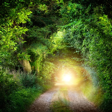 Photo for Fantasy landscape with a green tunnel of illuminated trees on a forest path leading to a mysterious light. Brightly lit outdoor night shot. - Royalty Free Image
