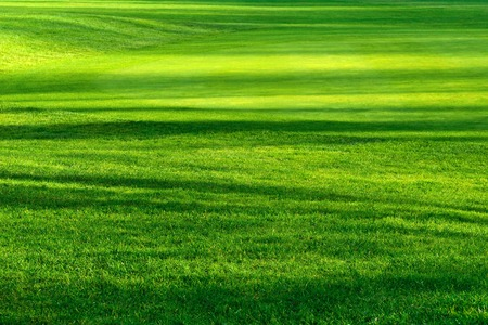 Foto de Striped pattern of light and shadows on a beautiful fresh green lawn of a golf course, vibrant color - Imagen libre de derechos